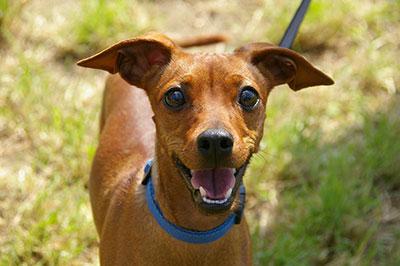hundeadfærdsterapeut